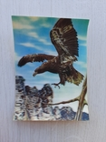 Немецкая ретро 3D открытка, фото №2