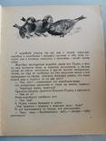 Детские книги о животных. 3 книги, фото №8