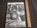 Садоводство, виноградарство и виноделие Молдавии 6/1966, фото №8