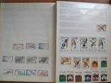 Почтовые марки 2, фото №6