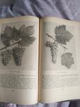 Виноградство, фото №6