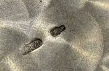 Пара рюмок на подносе. Киев 1955. Серебро 875. Вес 155,33 грамм, фото №7