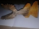 Орёл,дерево., фото №6