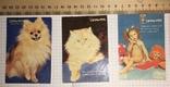 Реклама Укрдержстрах «Оранта», 1993 р.: собачка, котик, дівчи, фото №2
