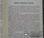 Американский кокер спаниель.(Содер., кормл., разв., леч.), фото №8
