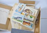 Альбом для развития речи детей раннего возраста СССР карточки, фото №4