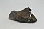 Залізний метеорит Gebel Kamil 70,6 г з сертифікатом автентичності, фото №5