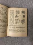 Життя Його закони і походження 1936 Послини і тварини В. Лункевич, фото №8