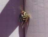 Золотой кулон с опалом и бриллиантами., фото №7