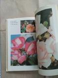 Комнатное цветоводство. Д. Ф. Юхимчук, фото №9