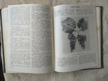 Ампелография ссср 1984, фото №6
