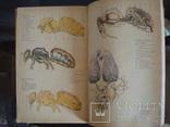 Пчеловодство,справочное пособие, фото №5