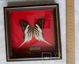 Бабочка в рамке Papilio androcles  Индонезия, фото №5