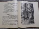 Расказы литератураведа, фото №11