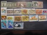 Австралия,животные,24 марки,гашеные, фото №2