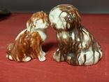 Две собаки, фото №5