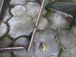 Стільчики виробничі чугунні 12 шт, фото №5