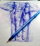 Слон. Африка, фото №2