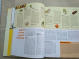 Все салаты (великий формат), фото №9