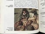 1984 У берегов Ледовитого океана. Рассказы о народах СССР, фото №11