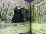 2017 Киев. Бессарабия. Одесская область. Рецепты Кулинария, фото №11