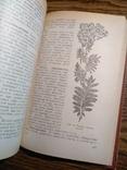 Растения в быту М.Рева 1982, фото №5