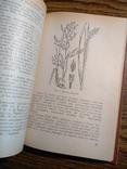 Растения в быту М.Рева 1982, фото №6