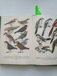 Птицы открытых и околоводных пространств ссср, фото №11