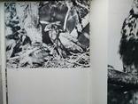 """""""Хищные птицы"""" Влодзимеж Пухальский. Варшава 1978 г., фото №5"""