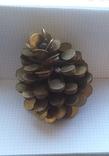 Кедровая шишка из монет, фото №4