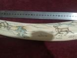 Бивень моржа (58 см, ~1.5 кг), фото №9