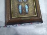 Бабочки, фото №4