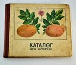 Каталог Сорта Картофеля, фото №2