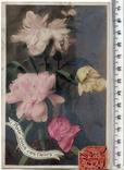 Старинная открытка. 1907 год. Разное.(2), фото №2