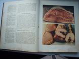 Книга о вкусной и здоровой пище  1953 год, фото №4