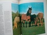 """""""Фотоохота"""" И.А. Мухин 1985 г., фото №11"""