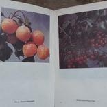 Книга(К зимнему столу)(Кулинария), фото №5