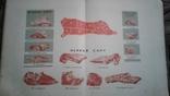 Книга о вкусной и здоровой пище 1962 год. 424стр., фото №10