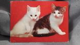 Открытка. Кошки, коты, котеночки, фото №2