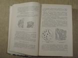 Товароведение пищевых продуктов. 1956 г. Военная академия., фото №4