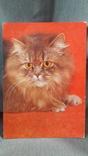 Открытка. Planet - Verlag Berlin. Кошка, кот, котенок, фото №2