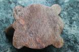 Черепаха в черепахе камень, фото №12