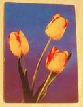 Фото открытка цветы 1971 Польша, фото №2