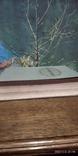 Книга Кулинария 1955 год, фото №5