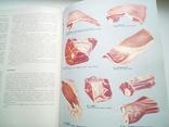Книга о вкусной и здоровой пище., фото №5