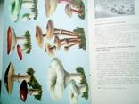 Книга о вкусной и здоровой пище., фото №6