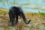Слон - бронза, фото №5