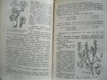 Лекарственные растения в народной медицине 1968г., фото №5