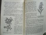Лекарственные растения в народной медицине 1968г., фото №6
