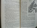 Культивируемые и дикорастущие лекарственные растения 1974г., фото №6